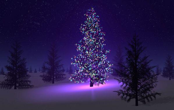 Christmas tree pic 2014 | Augusta Christian Schools